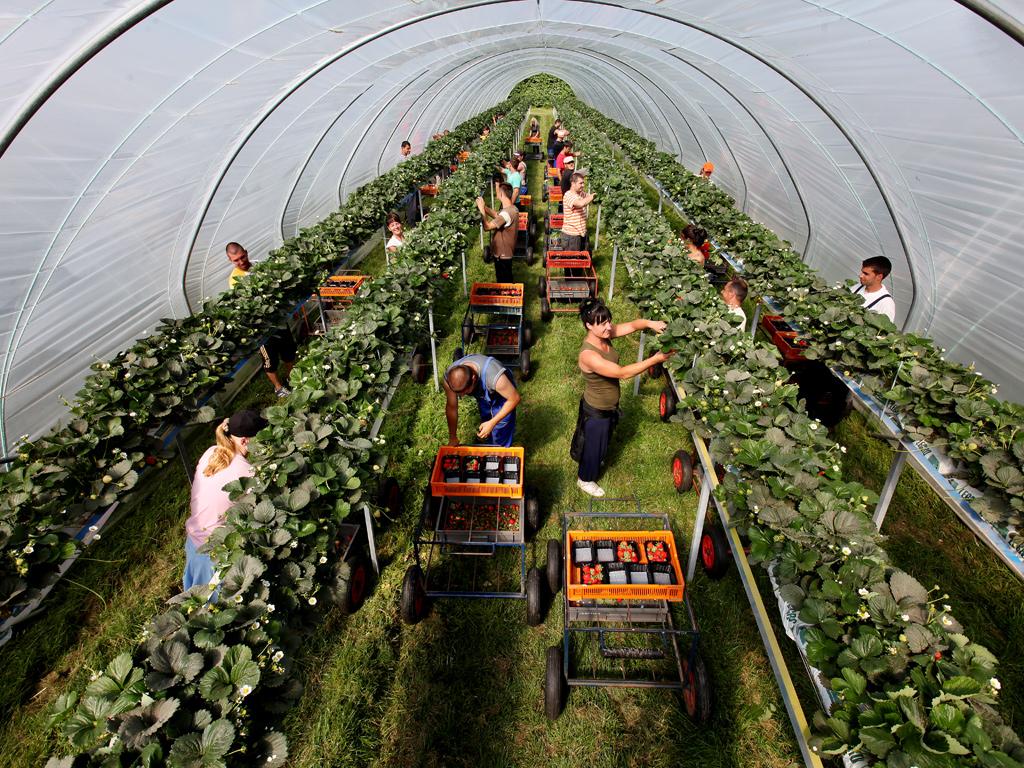 Выращивание урожая 63
