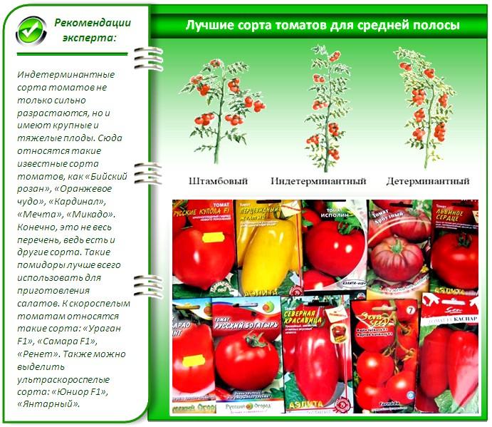 Семена помидоров для теплицы
