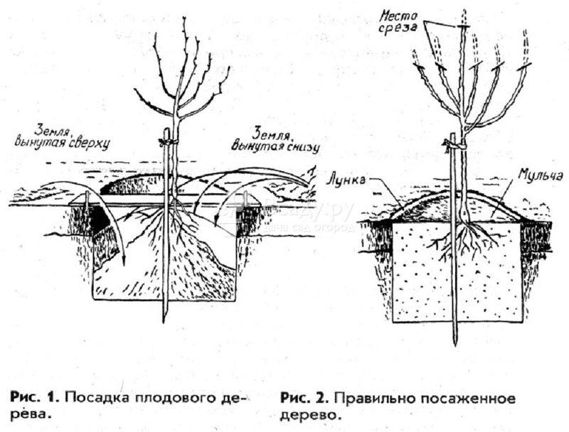 Схема посадочной ямы