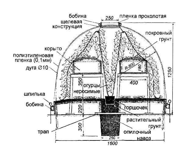 Схема выращивания шампиньонов в теплице