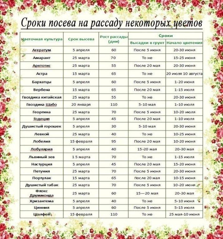Когда садить рассаду огурцов по лунному календарю