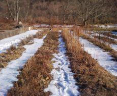 В начале месяца на участке снег еще есть, но его уже немного