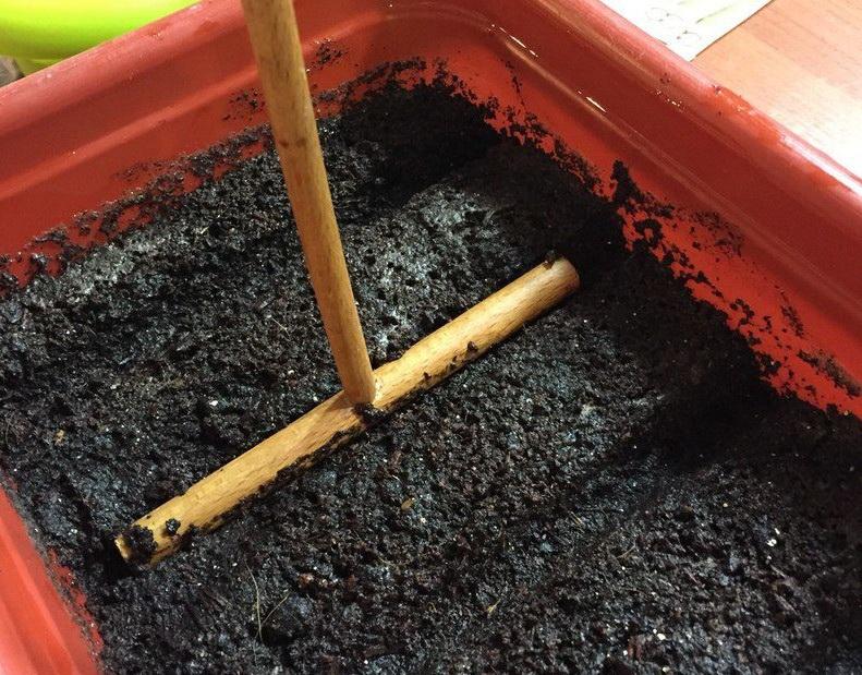 В увлажненном грунте нужно сделать небольшие бороздки