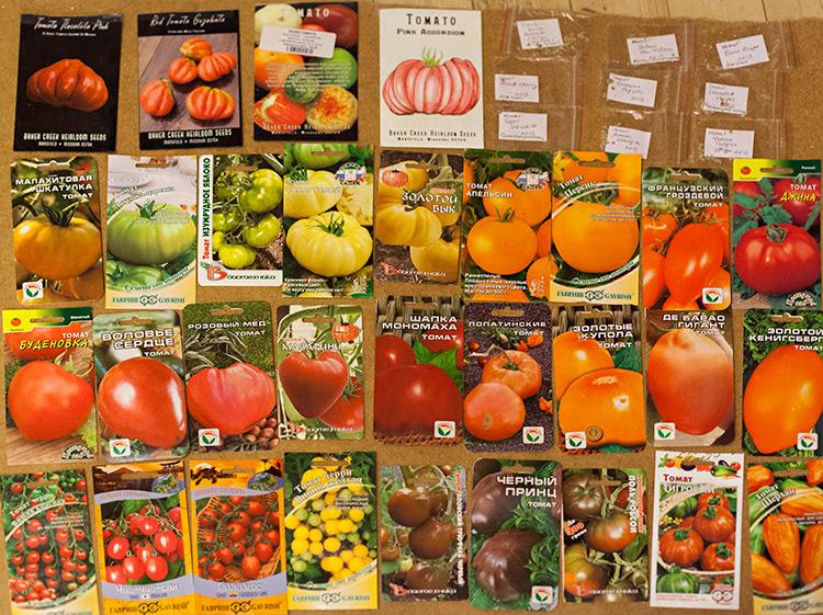 Выбор сорта томатов для теплицы