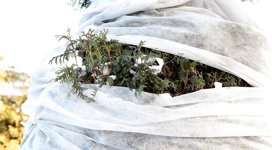 Живая изгородь из под укрытием из спанбонда