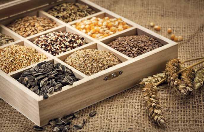 Заготовленные семена нужно проверить на всхожесть