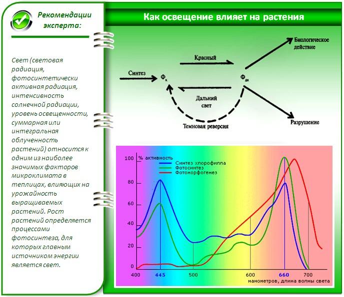 Зависимость активности процессов, происходящих в растениях, от длины световой волны