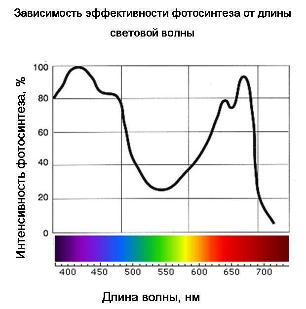 Зависимость эффективности фотосинтеза от длины световой волны