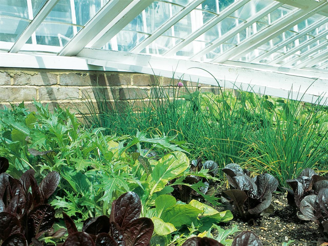 Выращивание зелени в теплице зимой: секреты для 50