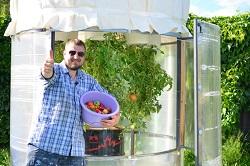 Пасынкование и сбор урожая