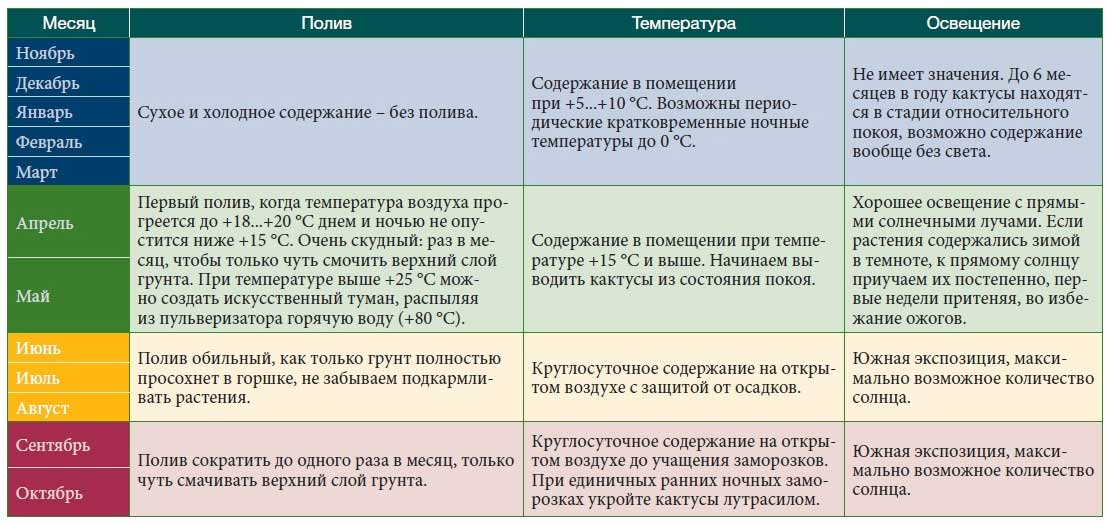 Кактусы: полный календарь ухода по месяцам