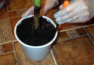 Шаг 2. Взрыхление почвы