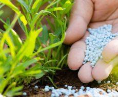 Азотные удобрения, их значение и применение
