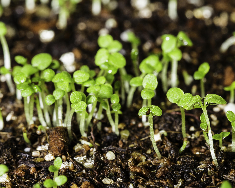 Что сеять в феврале на рассаду