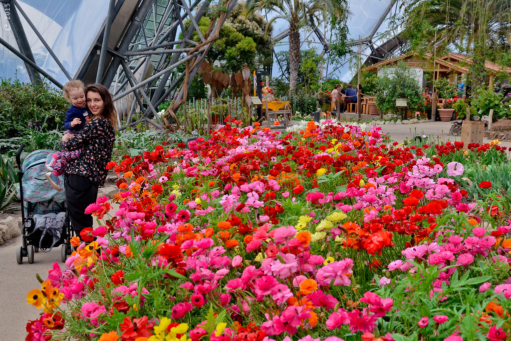 Цветники средиземноморского биома