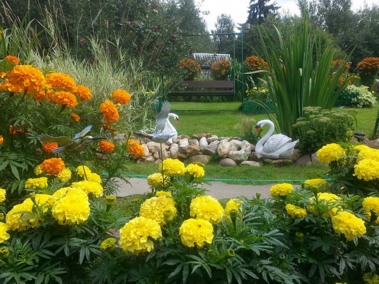 Цветы для дачи