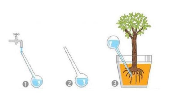 Еще один любопытный вариант - использование специальных шаров для автоматического полива