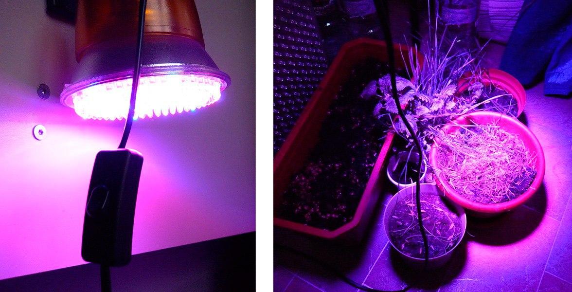 Фитолампа для комнатных растений