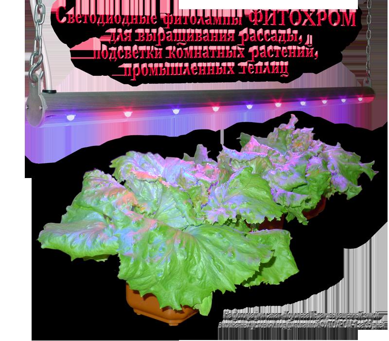 Фитолампы для растений ФИТОХРОМ