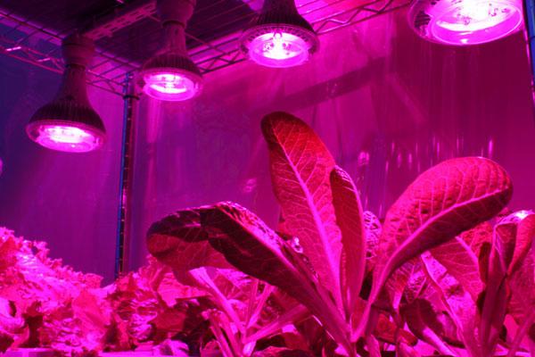 Фитолампы - светодиодные лампы для растений