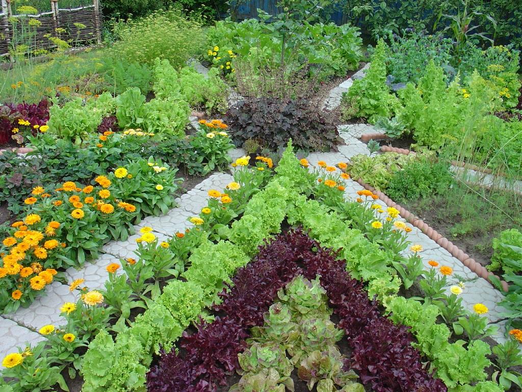 Фото цветов в дизайне огорода