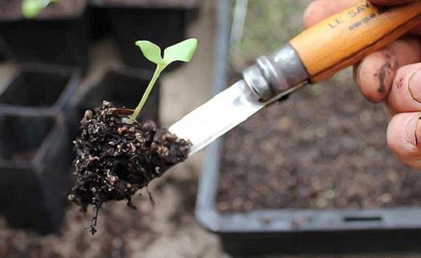 Извлечение ростка из земли