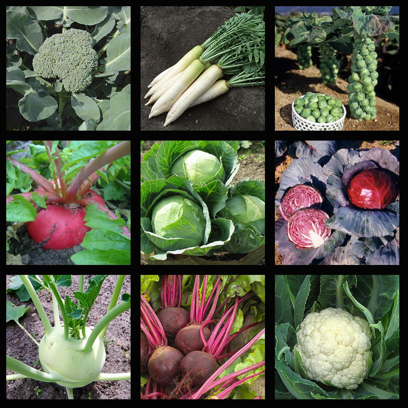Овощи на рассаду