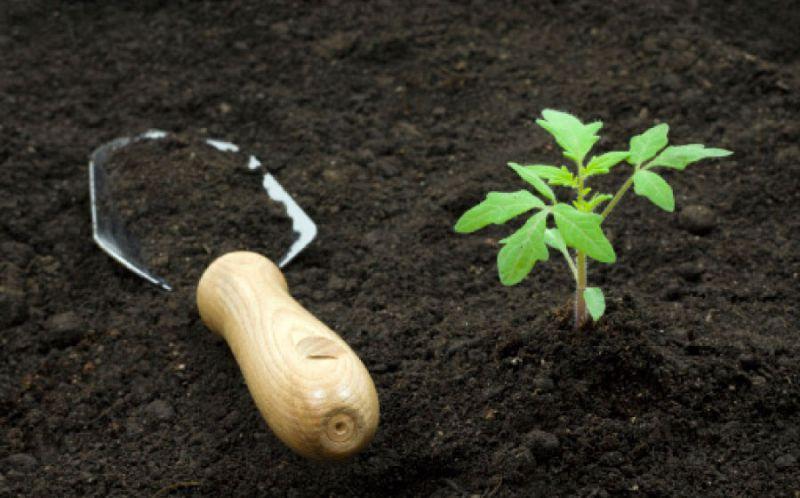 Почвосмесь для рассады помидоров