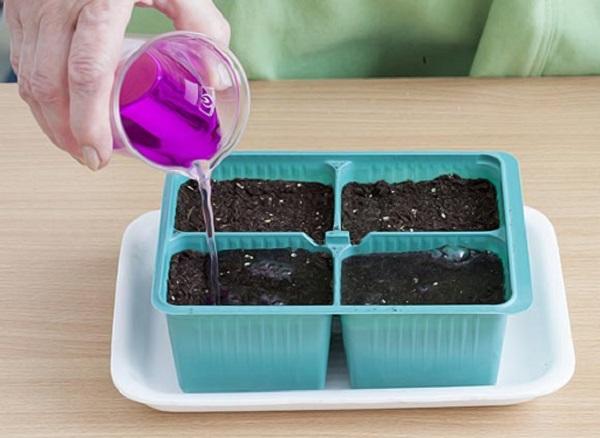 Подготовка рассадных стаканов с грунтом