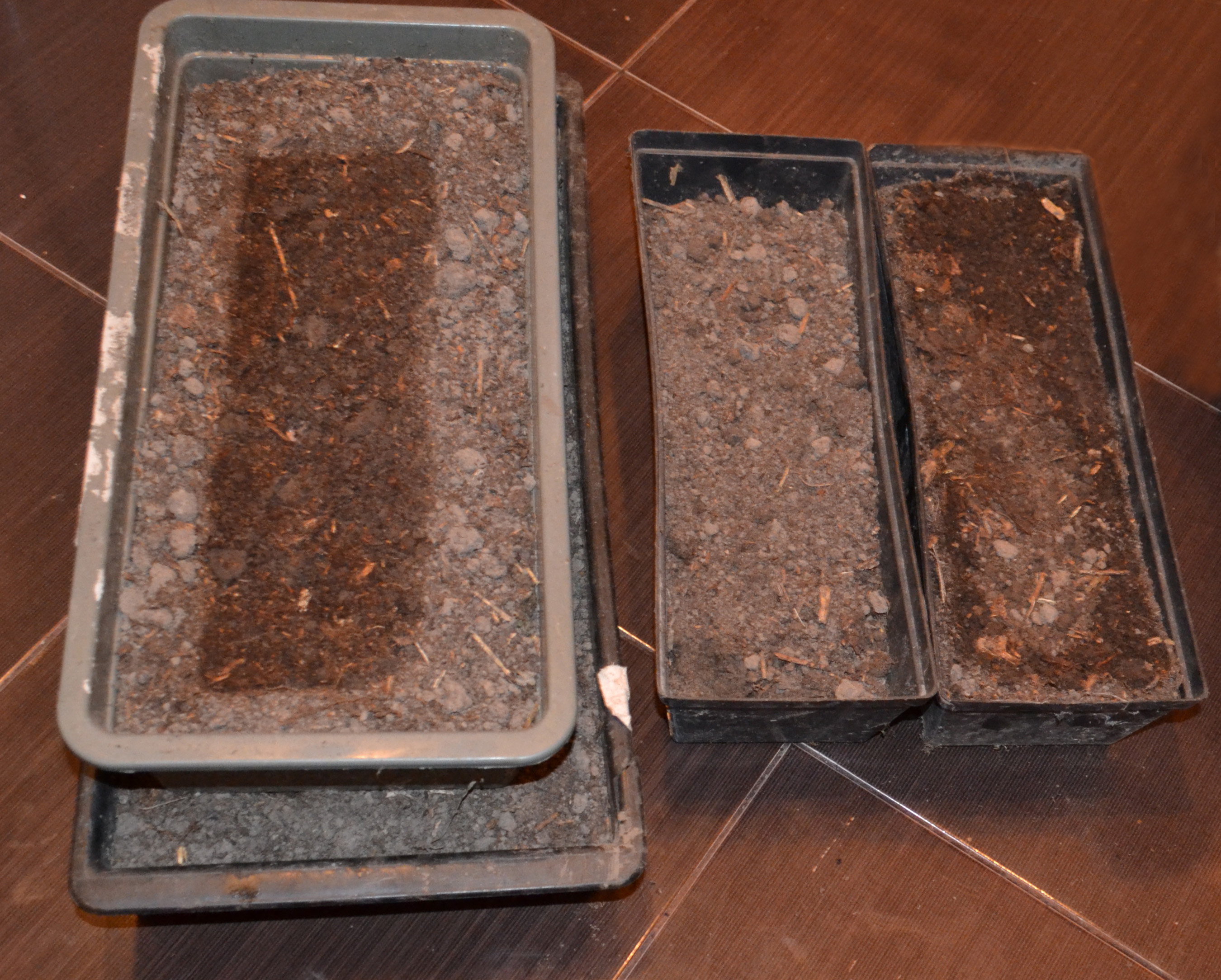 Подготовленные ящики для рассады астр
