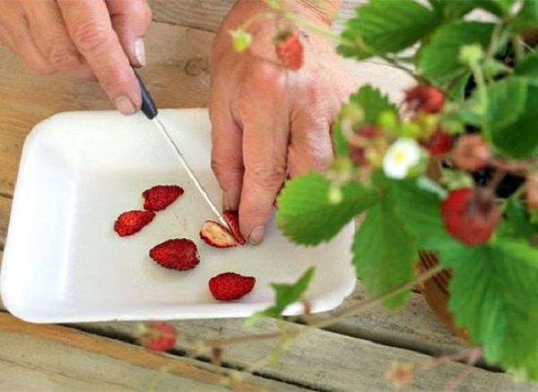 Посадка клубники семенами на рассаду