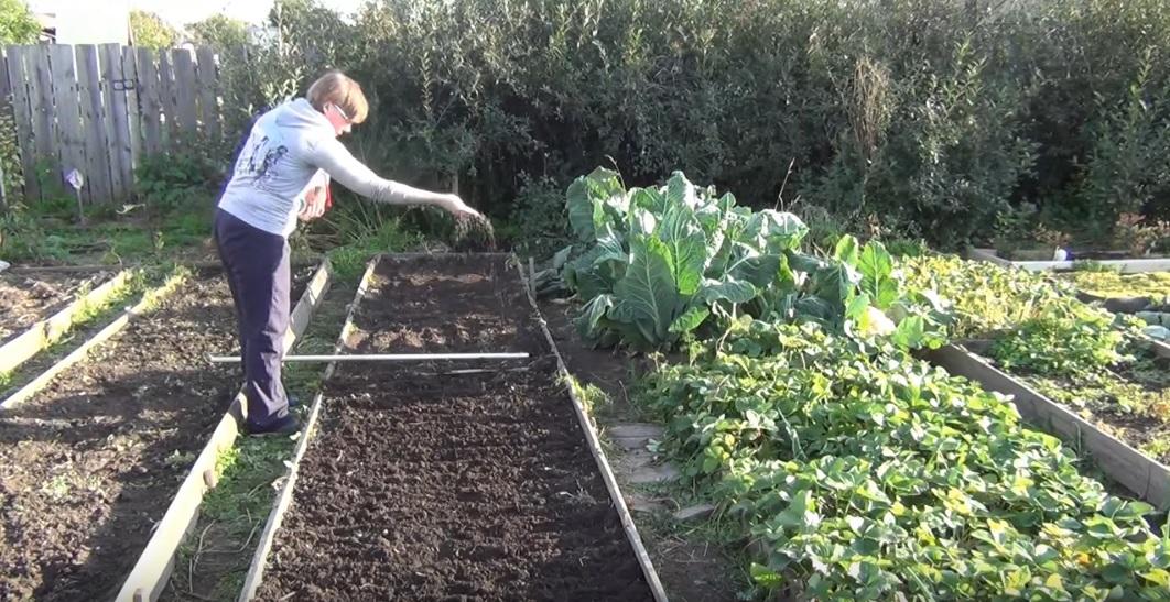 Посев семян сидератов