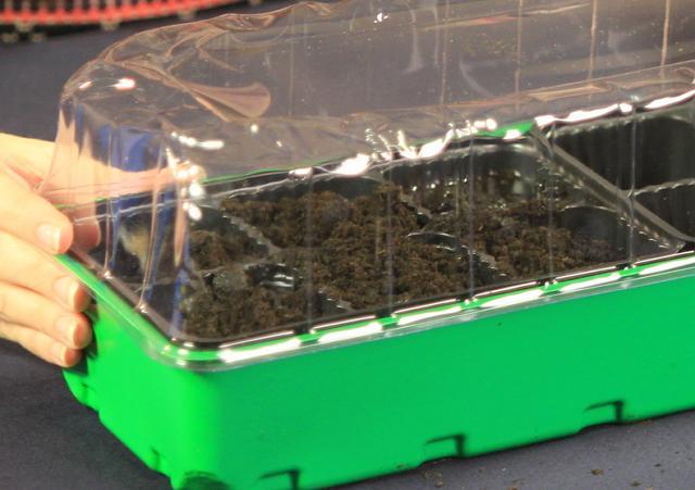 Посевы накрываются прозрачной крышкой