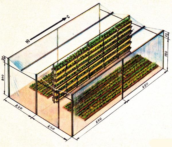 Пример размещения стеллажей в теплице