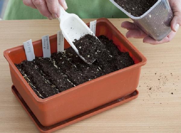 Присыпка посевов почвосмесью