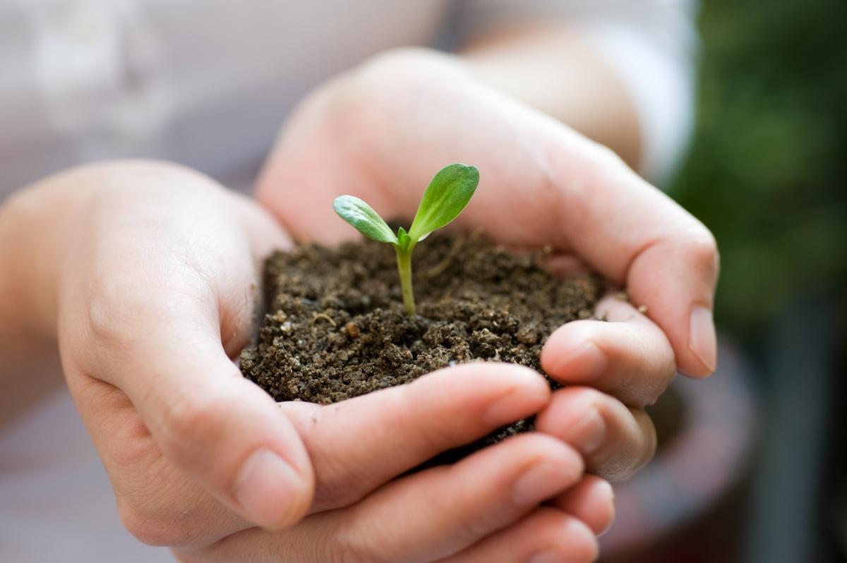 Рассаде нужно обеспечить все необходимые условия