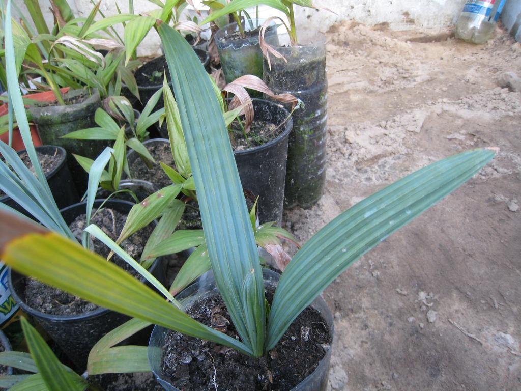 Растения в такой теплице