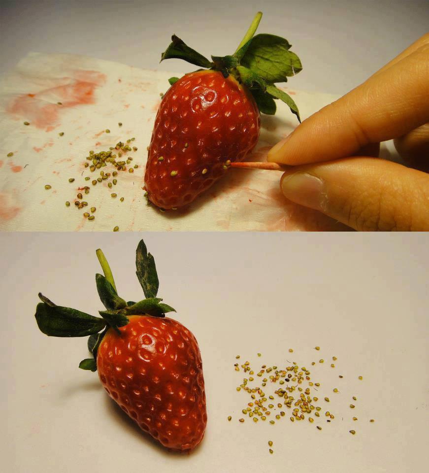 Способ сбора семян клубники на рассаду
