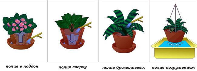 Способы полива комнатных растений