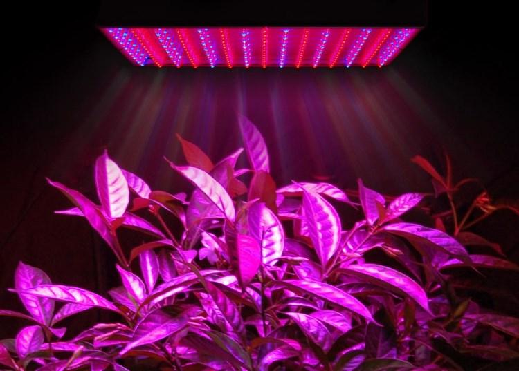 Сведодиодная подсветка растений