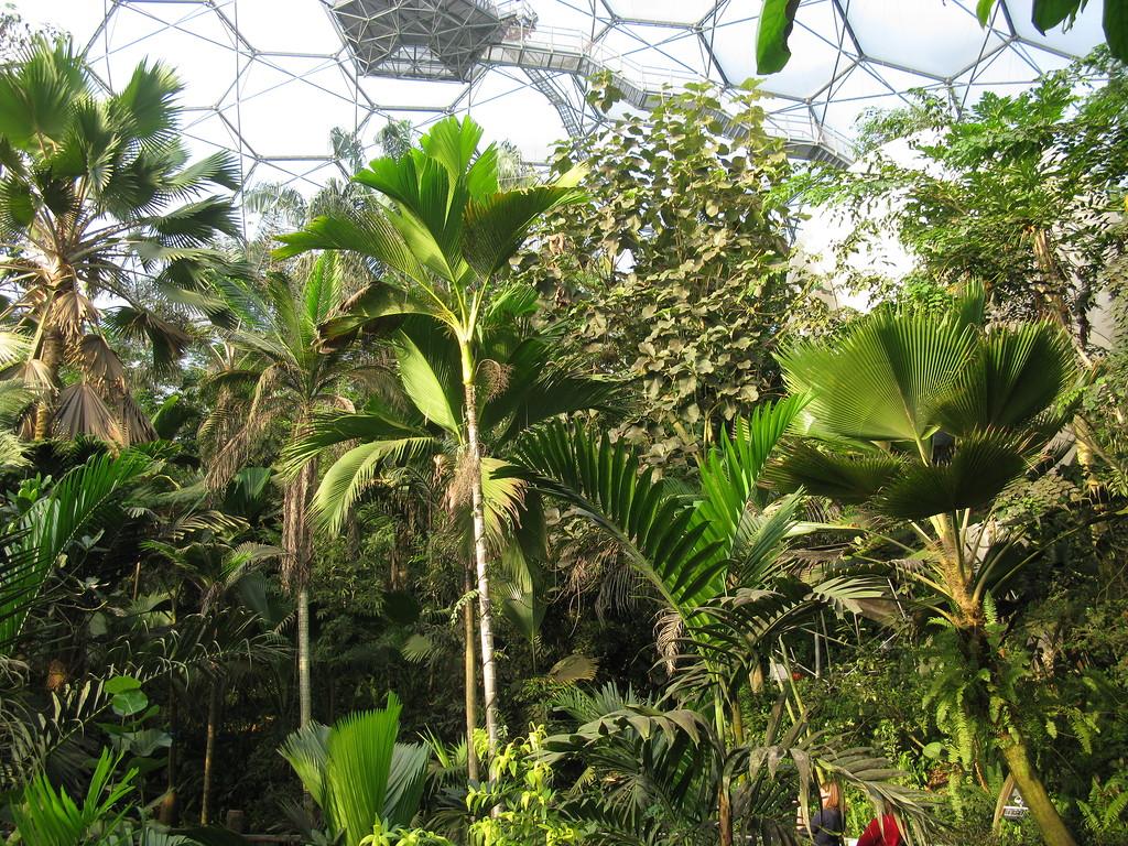 Тропический биом - густая растительность