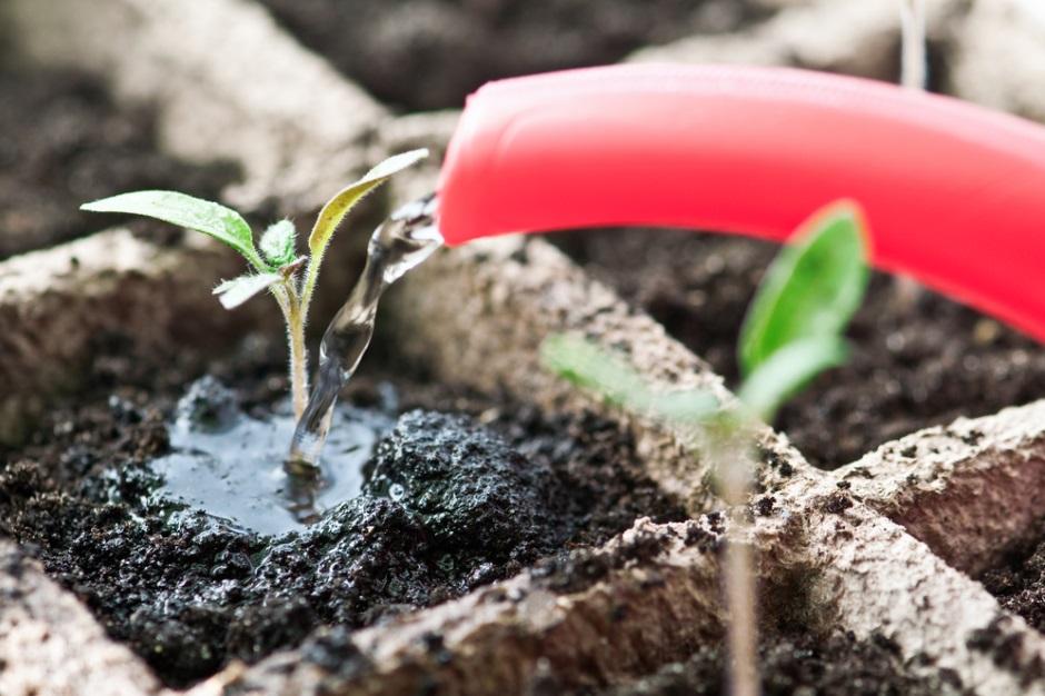 У выращивания рассадой много преимуществ