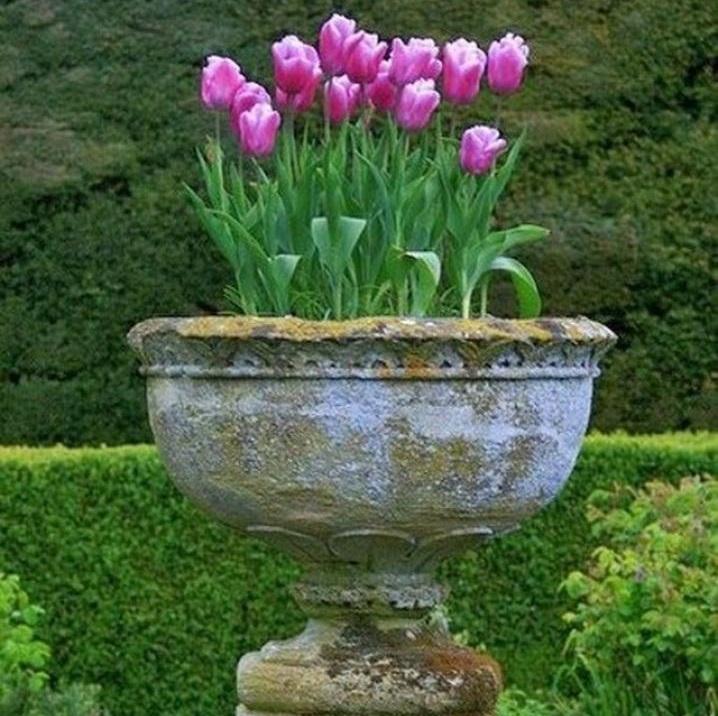 В качестве клумбы прекрасно будут смотреться старые огромные каменные вазы