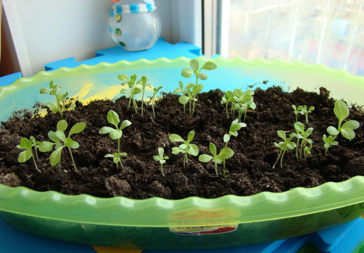 Посадка рассады: когда и как сажать семена 94