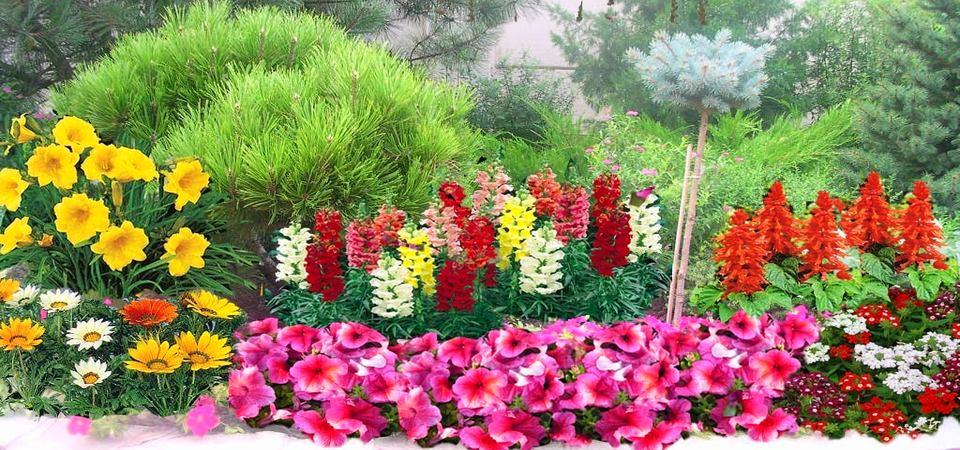 Выбираем цвета для садовой клумбы