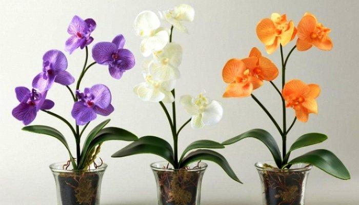 Выращивание орхидей в прозрачных горшках