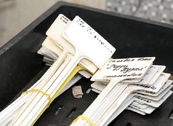 Этикетки для маркировки растений из подручных