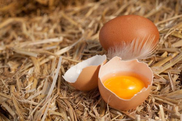 Яичная скорлупа как удобрение как применять