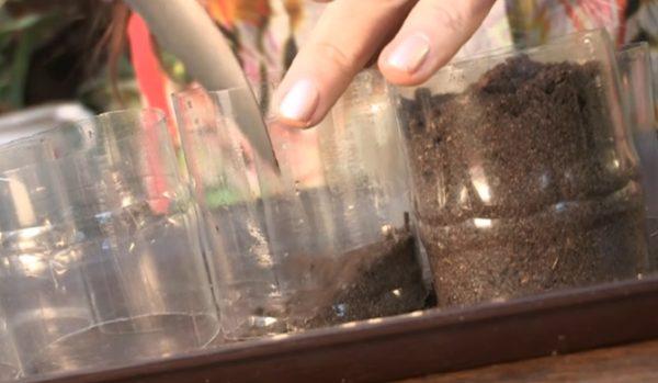 Заполнение пластиковой емкости для рассады землей