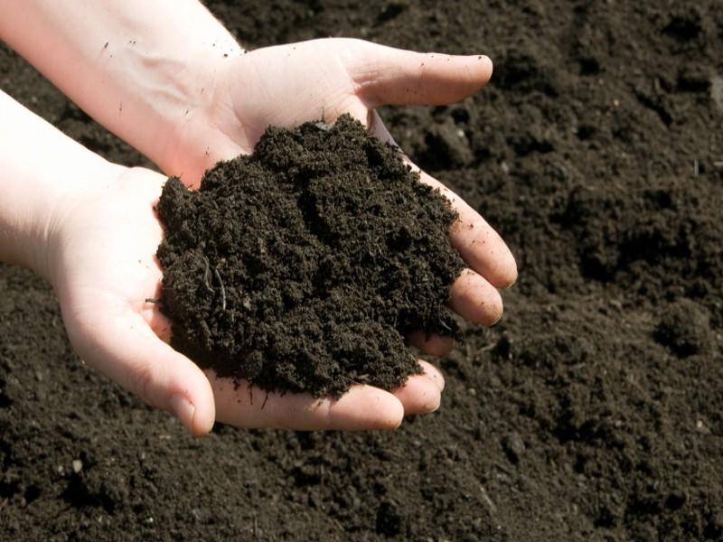 Земля для рассады должна быть питательной